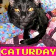 Caturday-Calvin