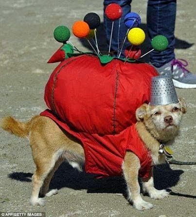 pincushion dog costume